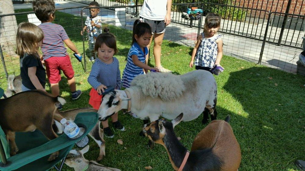 Wonderland Montessori of Anaheim Montessori Summer Camp Petting Zoo